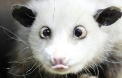 Some initial findings on Googles possum algorithm update